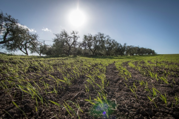 Agricoltura biologica Puglia